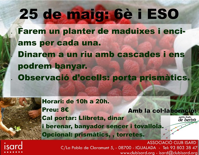 Planter de maduixes i enciams (25/05/2013) - Club Isard
